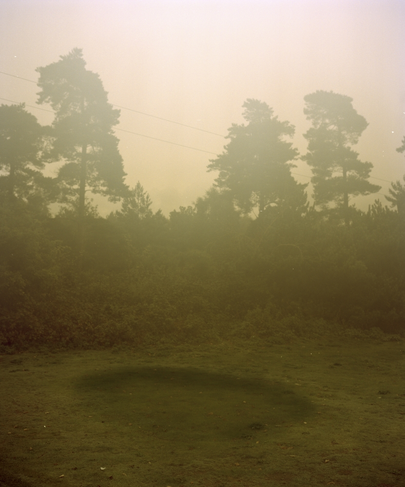 Rendlesham Forest, Suffolk, 2013