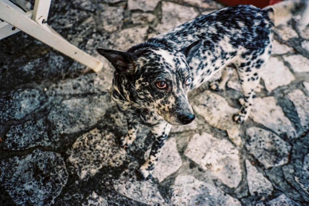 Dog, Pula, Croatia, 2014