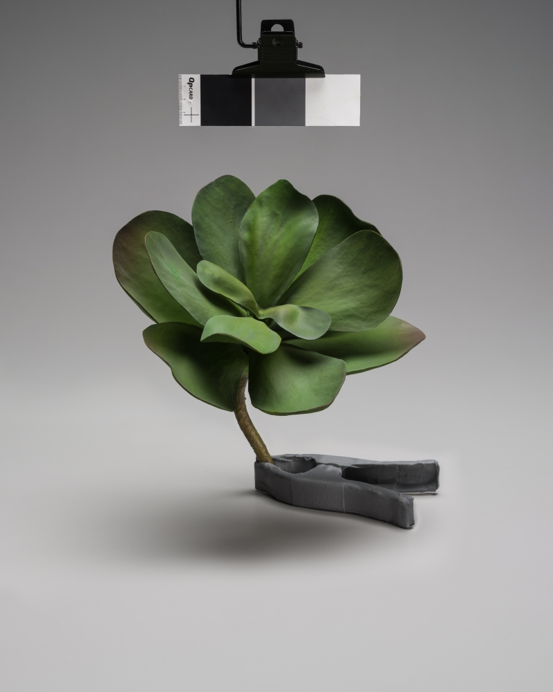 Studio Plant (After Christopher Williams), Oregon, Usa, 2013