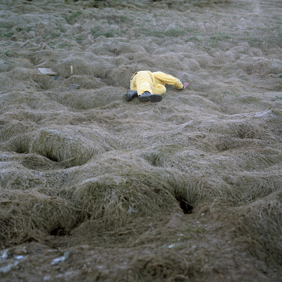 1 The Stranger in the Field, Wales, GBR, 2016