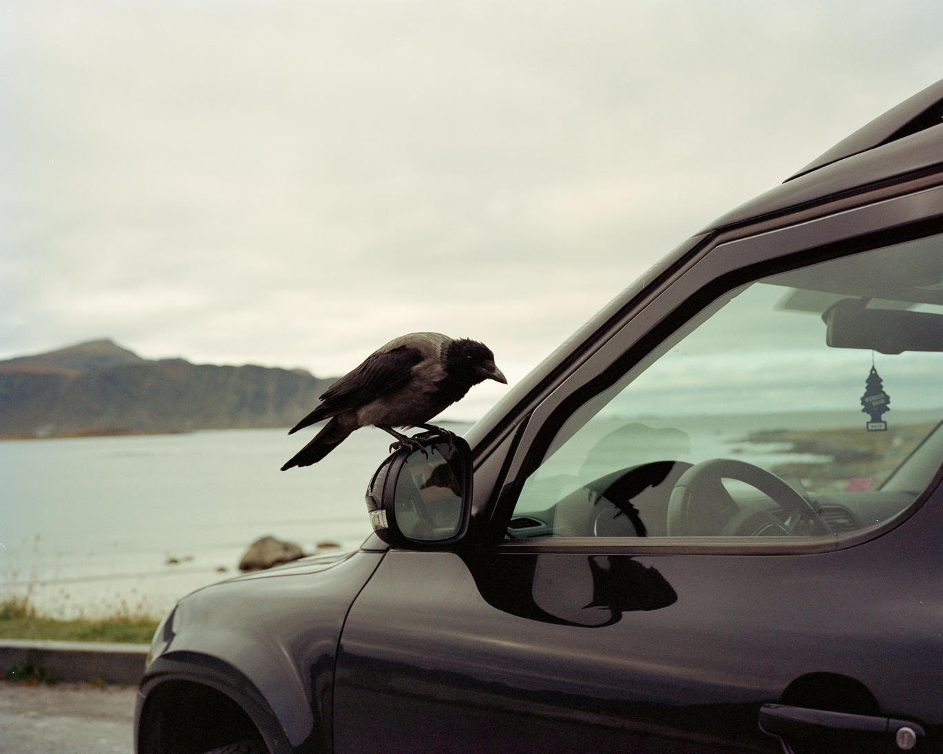 Conversation with a crow, Lofoten islands, NOR, 2017