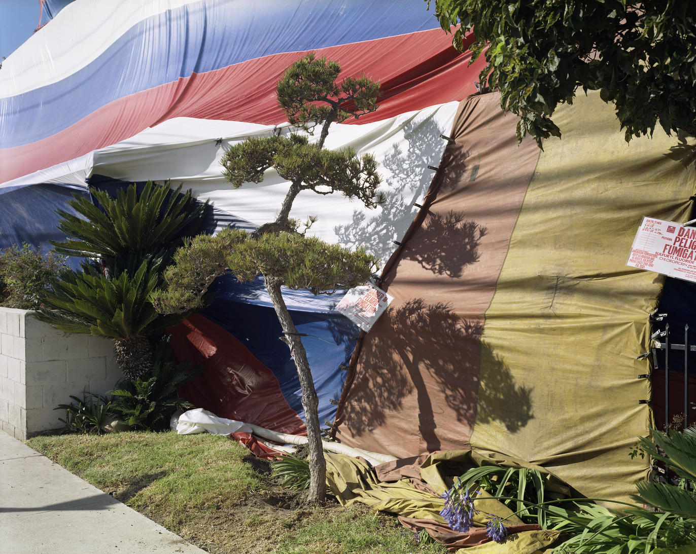 Fumigation Jungle, Los Angeles, USA, 2018