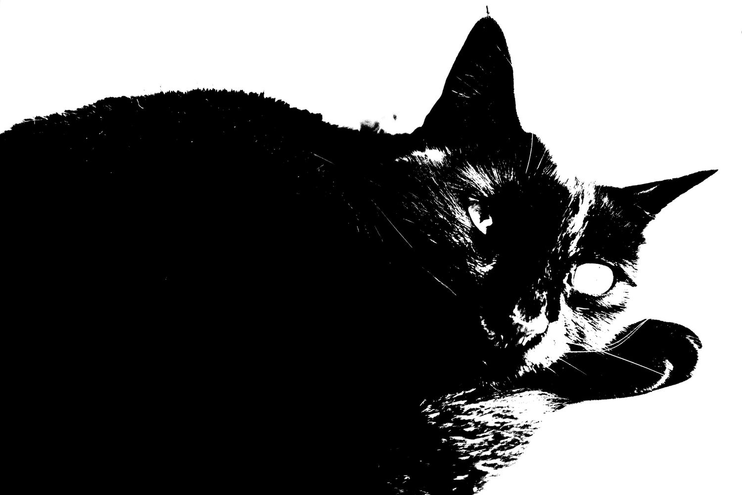 - The black cat with an eyeball, Athens, GRC, 2020